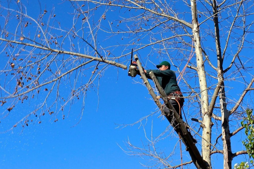 Contact Us-Montgomery Tree Trimming and Stump Grinding Services-We Offer Tree Trimming Services, Tree Removal, Tree Pruning, Tree Cutting, Residential and Commercial Tree Trimming Services, Storm Damage, Emergency Tree Removal, Land Clearing, Tree Companies, Tree Care Service, Stump Grinding, and we're the Best Tree Trimming Company Near You Guaranteed!