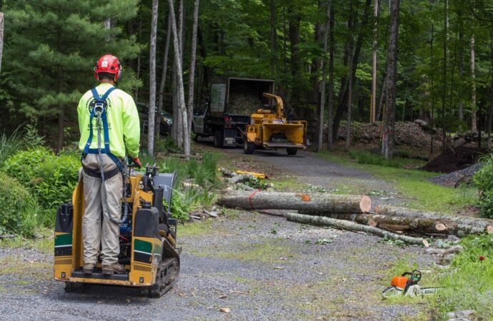 Emergency Tree Removal-Montgomery Tree Trimming and Stump Grinding Services-We Offer Tree Trimming Services, Tree Removal, Tree Pruning, Tree Cutting, Residential and Commercial Tree Trimming Services, Storm Damage, Emergency Tree Removal, Land Clearing, Tree Companies, Tree Care Service, Stump Grinding, and we're the Best Tree Trimming Company Near You Guaranteed!