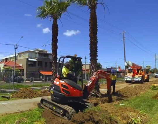 Palm Tree Removal-Montgomery Tree Trimming and Stump Grinding Services-We Offer Tree Trimming Services, Tree Removal, Tree Pruning, Tree Cutting, Residential and Commercial Tree Trimming Services, Storm Damage, Emergency Tree Removal, Land Clearing, Tree Companies, Tree Care Service, Stump Grinding, and we're the Best Tree Trimming Company Near You Guaranteed!