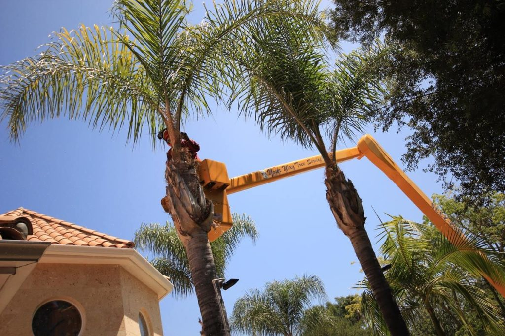 Palm Tree Trimming-Montgomery Tree Trimming and Stump Grinding Services-We Offer Tree Trimming Services, Tree Removal, Tree Pruning, Tree Cutting, Residential and Commercial Tree Trimming Services, Storm Damage, Emergency Tree Removal, Land Clearing, Tree Companies, Tree Care Service, Stump Grinding, and we're the Best Tree Trimming Company Near You Guaranteed!