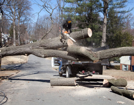 Residential Tree Services-Montgomery Tree Trimming and Stump Grinding Services-We Offer Tree Trimming Services, Tree Removal, Tree Pruning, Tree Cutting, Residential and Commercial Tree Trimming Services, Storm Damage, Emergency Tree Removal, Land Clearing, Tree Companies, Tree Care Service, Stump Grinding, and we're the Best Tree Trimming Company Near You Guaranteed!