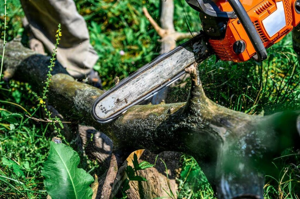 Services-Montgomery Tree Trimming and Stump Grinding Services-We Offer Tree Trimming Services, Tree Removal, Tree Pruning, Tree Cutting, Residential and Commercial Tree Trimming Services, Storm Damage, Emergency Tree Removal, Land Clearing, Tree Companies, Tree Care Service, Stump Grinding, and we're the Best Tree Trimming Company Near You Guaranteed!