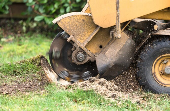 Stump Grinding-Montgomery Tree Trimming and Stump Grinding Services-We Offer Tree Trimming Services, Tree Removal, Tree Pruning, Tree Cutting, Residential and Commercial Tree Trimming Services, Storm Damage, Emergency Tree Removal, Land Clearing, Tree Companies, Tree Care Service, Stump Grinding, and we're the Best Tree Trimming Company Near You Guaranteed!