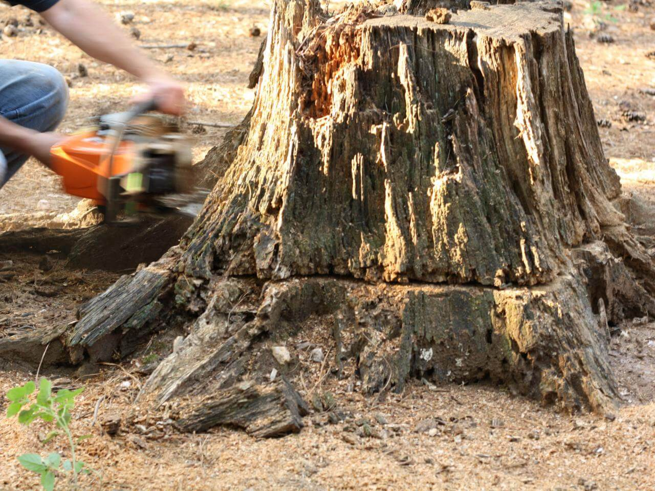 Stump Removal-Montgomery Tree Trimming and Stump Grinding Services-We Offer Tree Trimming Services, Tree Removal, Tree Pruning, Tree Cutting, Residential and Commercial Tree Trimming Services, Storm Damage, Emergency Tree Removal, Land Clearing, Tree Companies, Tree Care Service, Stump Grinding, and we're the Best Tree Trimming Company Near You Guaranteed!