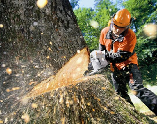 Tree Cutting-Montgomery Tree Trimming and Stump Grinding Services-We Offer Tree Trimming Services, Tree Removal, Tree Pruning, Tree Cutting, Residential and Commercial Tree Trimming Services, Storm Damage, Emergency Tree Removal, Land Clearing, Tree Companies, Tree Care Service, Stump Grinding, and we're the Best Tree Trimming Company Near You Guaranteed!