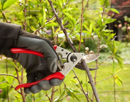 Tree Pruning-Montgomery Tree Trimming and Stump Grinding Services-We Offer Tree Trimming Services, Tree Removal, Tree Pruning, Tree Cutting, Residential and Commercial Tree Trimming Services, Storm Damage, Emergency Tree Removal, Land Clearing, Tree Companies, Tree Care Service, Stump Grinding, and we're the Best Tree Trimming Company Near You Guaranteed!