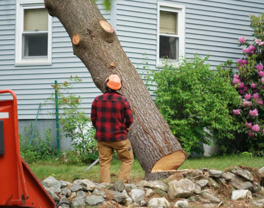 Tree Removal-Montgomery Tree Trimming and Stump Grinding Services-We Offer Tree Trimming Services, Tree Removal, Tree Pruning, Tree Cutting, Residential and Commercial Tree Trimming Services, Storm Damage, Emergency Tree Removal, Land Clearing, Tree Companies, Tree Care Service, Stump Grinding, and we're the Best Tree Trimming Company Near You Guaranteed!