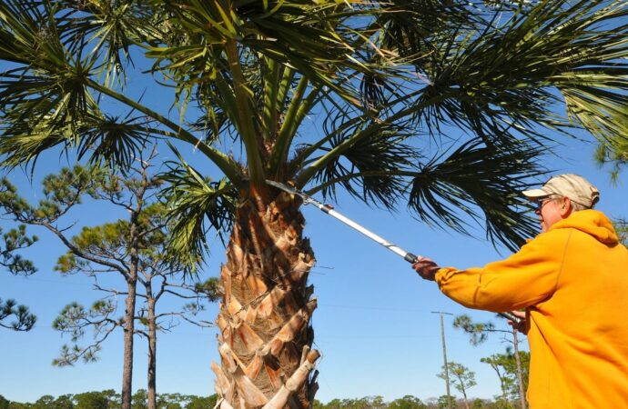 Wetumpka-Montgomery Tree Trimming and Stump Grinding Services-We Offer Tree Trimming Services, Tree Removal, Tree Pruning, Tree Cutting, Residential and Commercial Tree Trimming Services, Storm Damage, Emergency Tree Removal, Land Clearing, Tree Companies, Tree Care Service, Stump Grinding, and we're the Best Tree Trimming Company Near You Guaranteed!